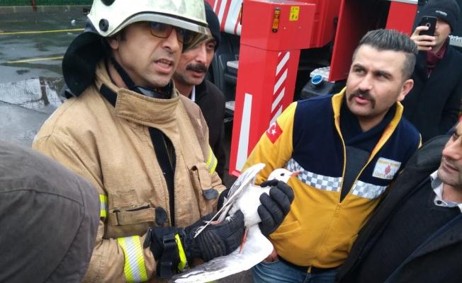 Yaralı Martı Belediye Ekiplerince Kurtarıldı